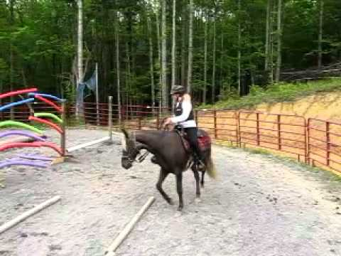 Rocky Mountain Horse Oohlala on Obstacle Course at Walnut Ridge Farm