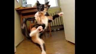 Die lustigsten Katzen der Welt