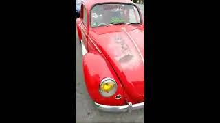 Vw June Bug Mg