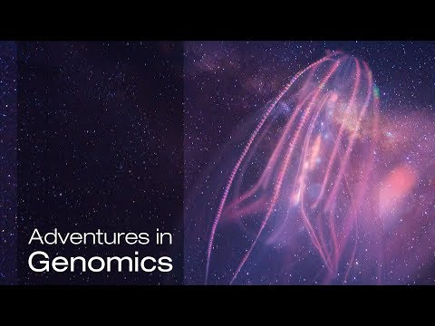 A Dive into the Complex Universe of Our Brain | Adventures in Genomics