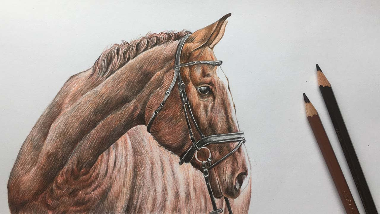 Horse Face Drawing in Color Pencils | Animal Drawing ...