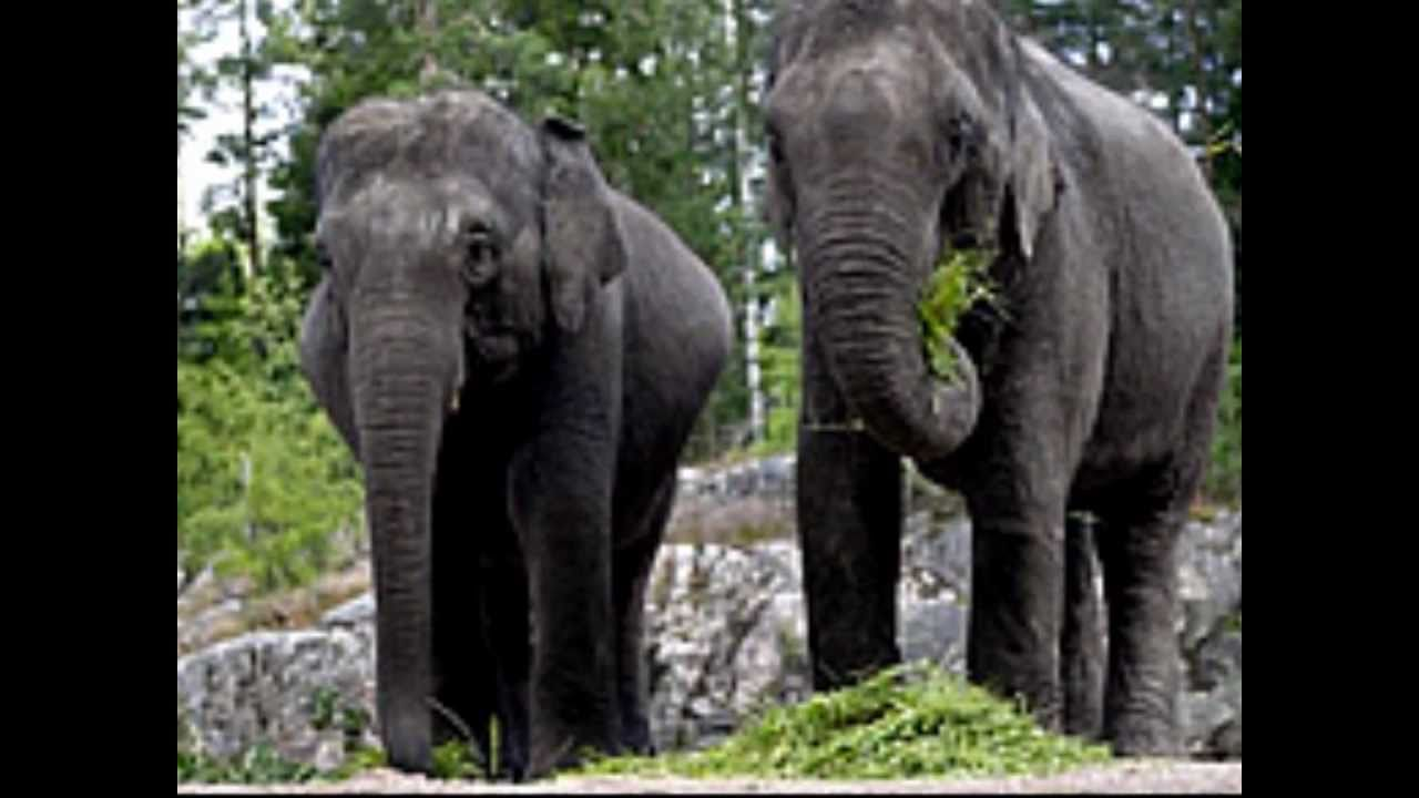 Endangered animals of Asia - YouTube