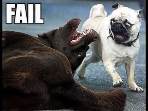 dog fail compilation funny animal pix puppy lol   youtube