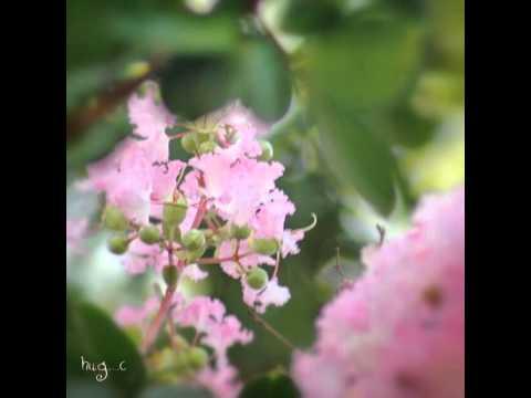 Jewelweed (Impatiens capensis). #ontario #flora #instaflowers #petroglyphsprovincialpark #botany #