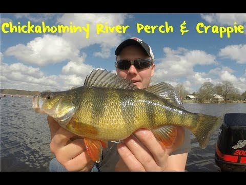 Chickahominy River Perch & Crappie Fishing