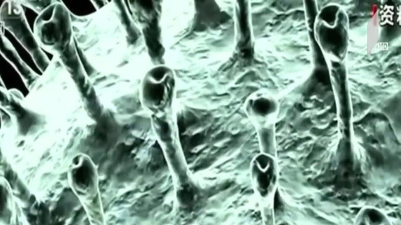 კორონავირუსის გავრცელების პრევენცია