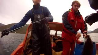 kveitefiske på vestlandet
