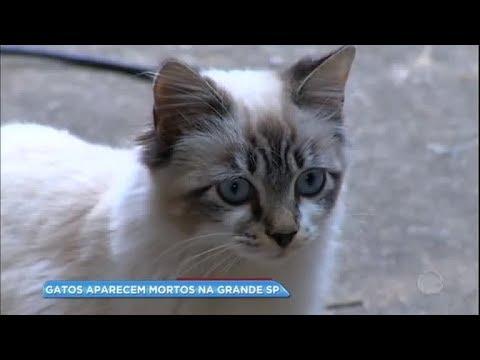Gatos aparecem mortos na grande SP