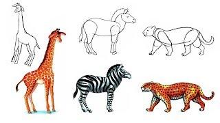 how to draw animals. Giraffe Leopard Zebra.