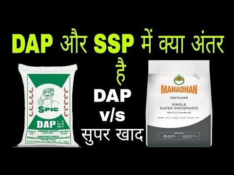 SSP v/s DAP single super phosphate and diammonium phosphate fertilizer
