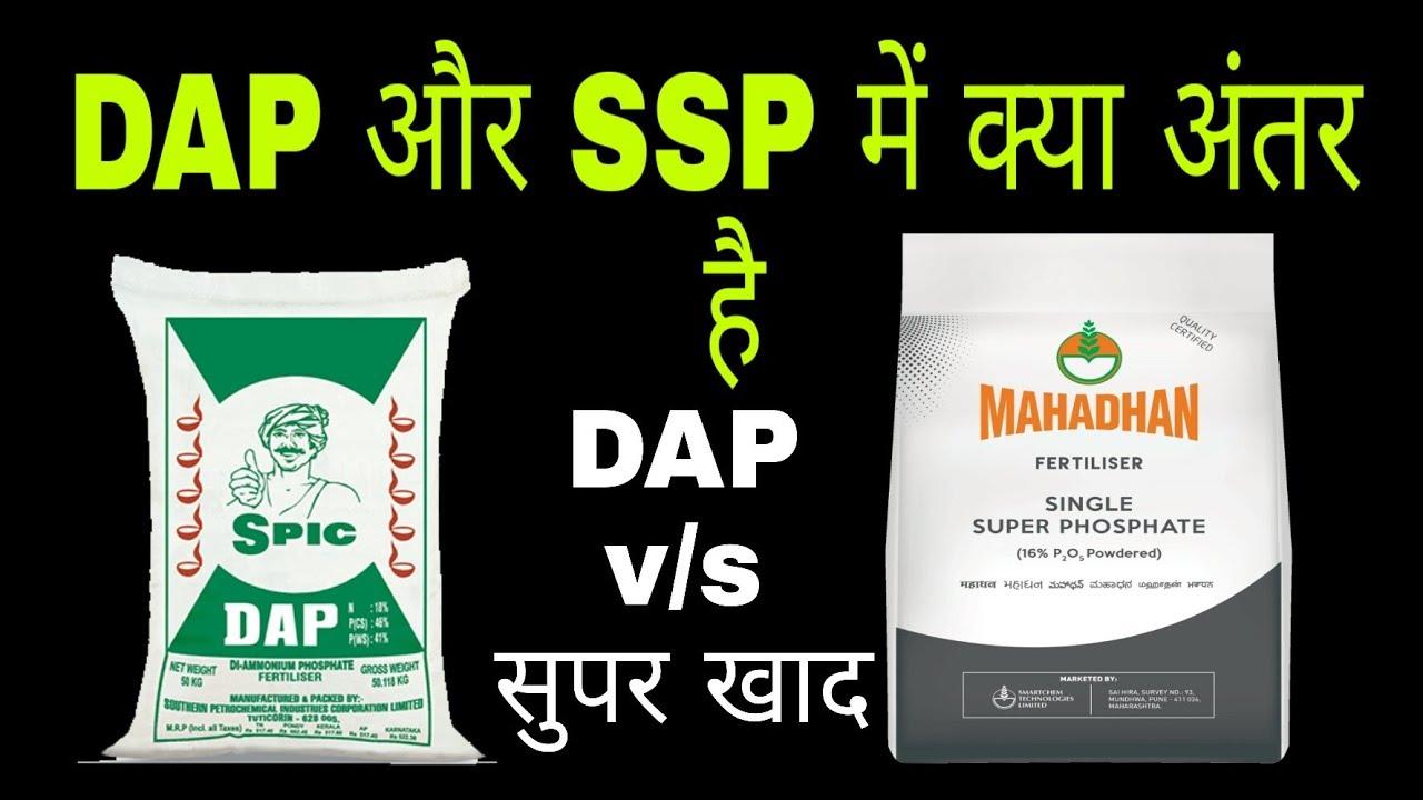SSP v/s DAP|single super phosphate and diammonium phosphate fertilizer