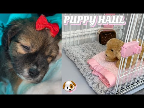 I GOT A PUPPY   PUPPY HAUL + VLOG