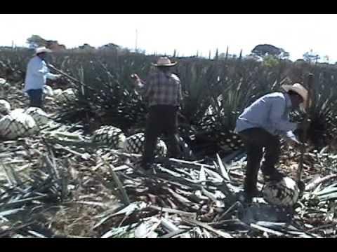 Veracruz tequila el jarocho