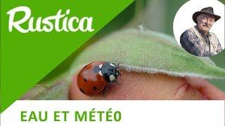 Comment attirer les insectes auxiliaires