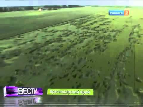 Crop circle disaster warning in Russian UFO hotspot, Krasnodar