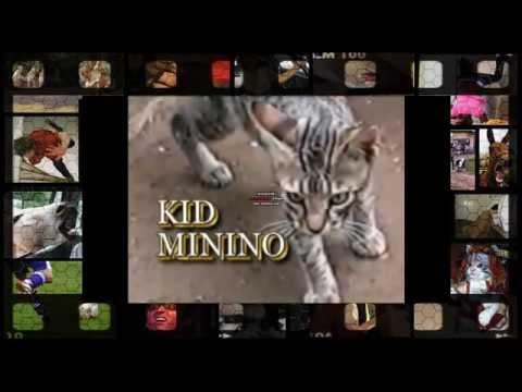 Gallina fina vs kid minino descargar videos