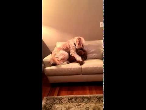 BELIEVE - Konner's Christmas 2013 from YouTube · Duration:  8 minutes 25 seconds