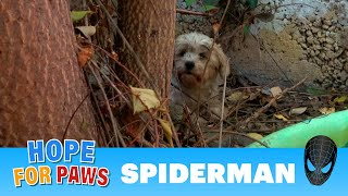 Abandoned dog surrounded by spiders and rescuers