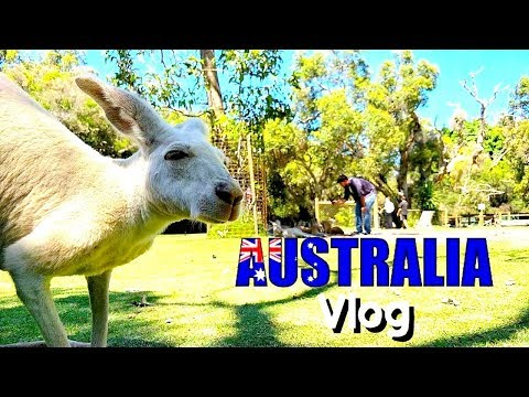 The Comedy Factory | Australia Tour | VLOG