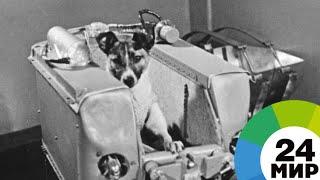 Первая в космосе: 60 лет полету собаки Лайки - МИР 24 - МИР 24