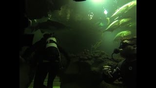 Shark Dive - Blue Planet Aquarium - Chester - Gopro Black