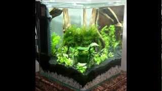 Nano-Aquarium Einrichten