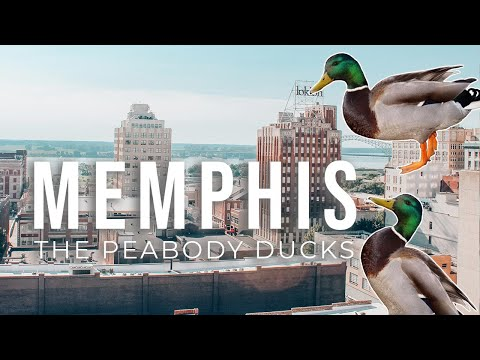 The Peabody Hotel In Memphis: March Of Ducks