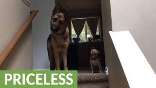 kid-reunites-with-dogs-after-long-day-at-school