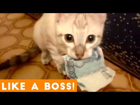 Like a Boss Ultimate Smart Animal Compilation | Funny Pet Vi