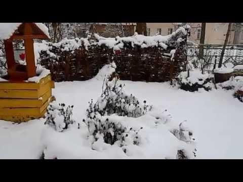 Снег идёт, снег идёт к белым звёздочкам в буране - стихи
