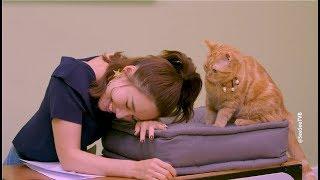《金宵大廈》全球貓貓選拔大會   See See TVB