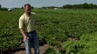 Control of giant ragweed