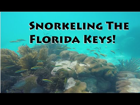 Snorkeling The Coral Reefs Of Florida Keys