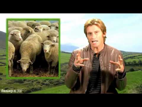Denis Leary : Great Moments in Irish History