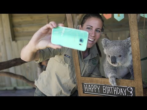 This Koala has the best Birthday Party EVER!