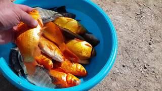 דיג באגם ירוחם Рыбалка на озере Ерухам 05 11 2019