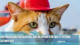 Американцам рассказали, как на Крымском мосту Путина затмил кот кот Мостик