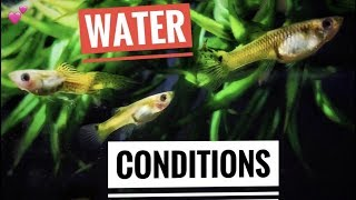 Guppy Fish Care |Water Conditions|
