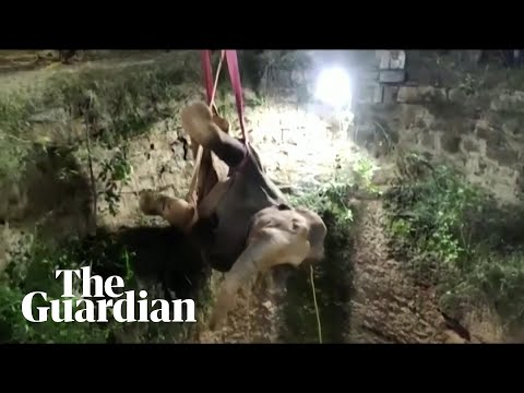 Elephant-trapped-in-well-in-India-rescued-during-12-hour-crane-operation