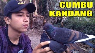 Download Video BURUNG MERPATI CEPAT GIRING KANDANG # MERPATIKU MP3 3GP MP4