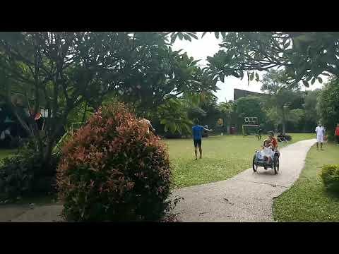 Cantiknya Merak Hijau India di Mini Zoo Aston Cirebon Hotel & Convention Center
