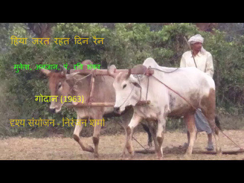 हिया  जरत रहत दिन रैन -गोदान ,पं। रविशंकर