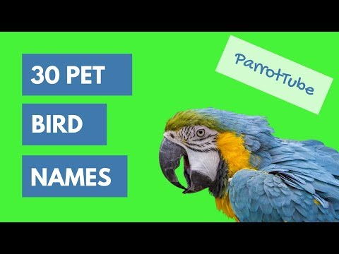 Pet Bird Names Top 30   ParrotTube