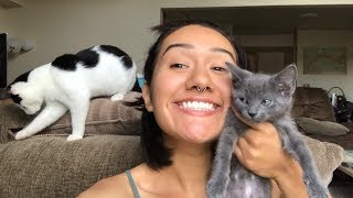ADOPTING TWO CATS *emotional*