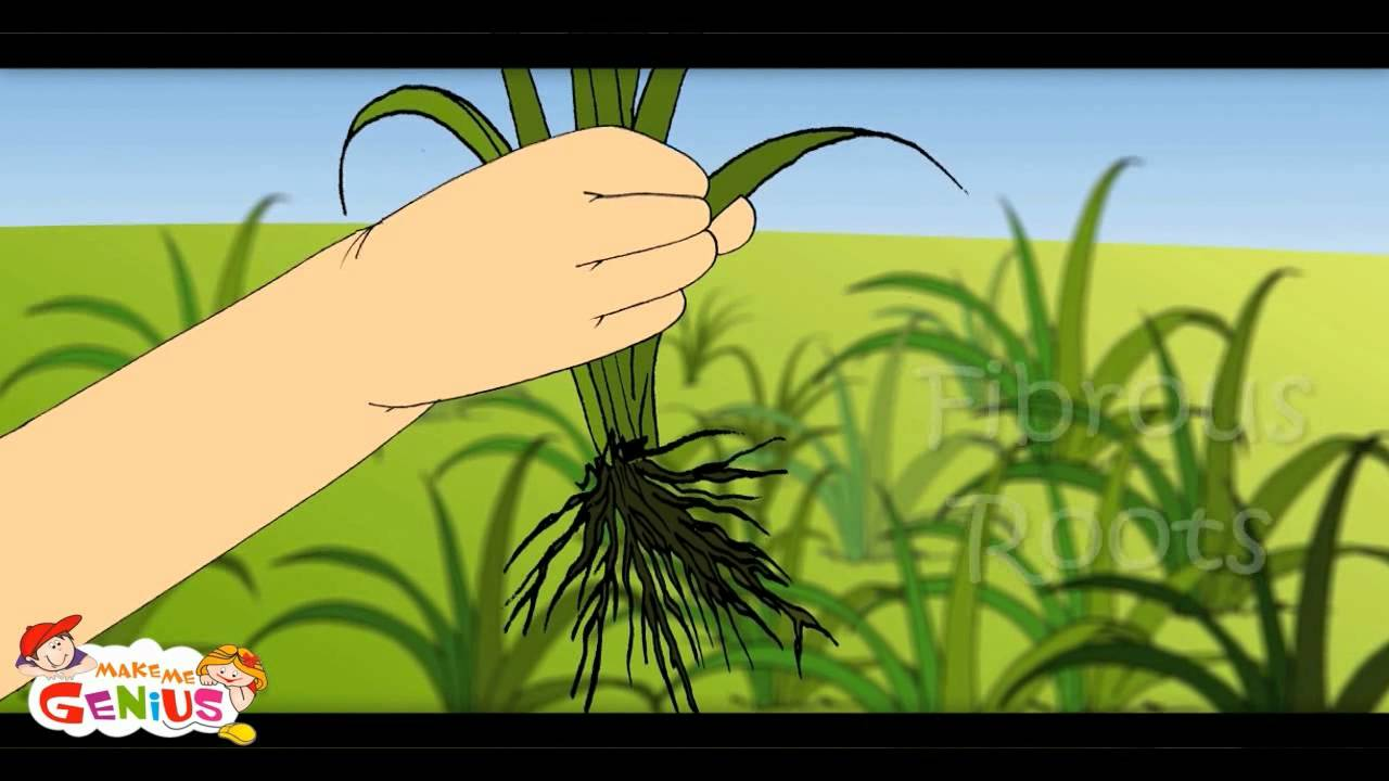 Parts of Plant -Lesson 1 -Kids--Class 4,Class 5,Grade 4,Grade 5,Students