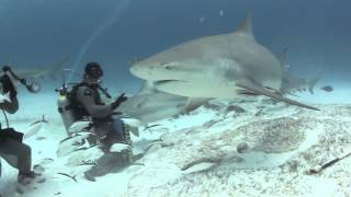 Feeding Bull Sharks - NO CAGE DIVING WITH MASSIVE SHARKS PDC 2013  1