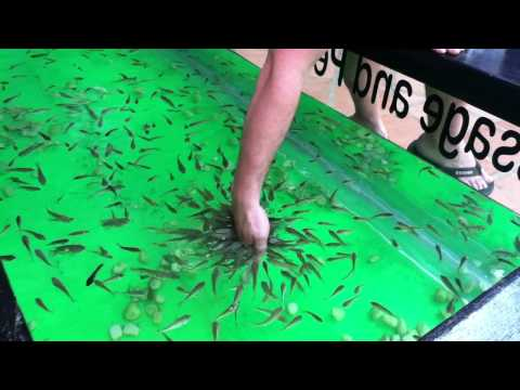 Siem reap 39 foot massage 39 mt cambodia doovi for Fish pedicure los angeles