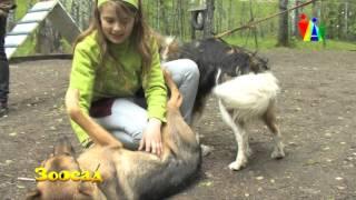 Приют для бездомных животных Академгородка: как живут спасенные четвероногие