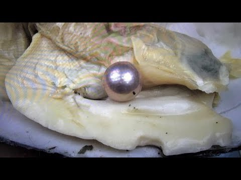 GIANT REAL EDISON PEARL FOUND.. WORLD RECORD CHALLENGE!