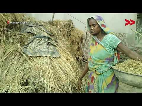 Waiting for MNREGA Job Cards: Women Struggle to Make Ends Meet